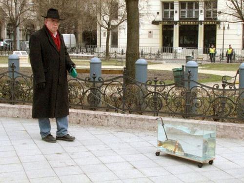 fish-friend