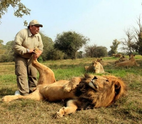 massage-lion