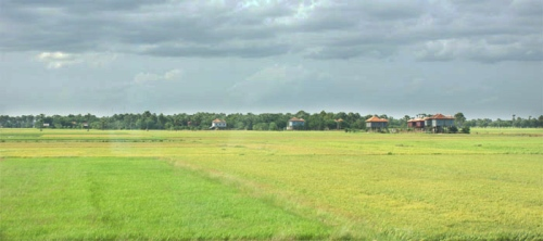 Rice Field, Pea Rang, Prey Veng