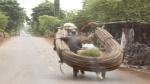 On the road from Kampong Cham to Kratie, Cambodia, នៅលើដងផ្លូវពីកំពង់ចាម ទៅក្រចេះ, រទេះសេះ, ដឹកគោ, ដឹកឆ្កែ, សត្វសេះ, សត្វគោ, សត្វឆ្កែ, ដឹកធ្ងន់, ស្រុកខ្មែរ, ស្រុកស្រែ