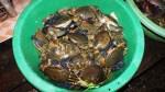 Seafood, Kampong Som